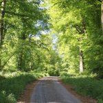 Hesdin forest