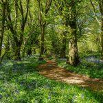 Tournehem Forest path